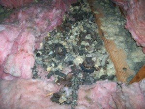 ANIMAL%20DROPPINGS%20IN%20ATTIC